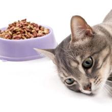 Почему кошка плохо ест?